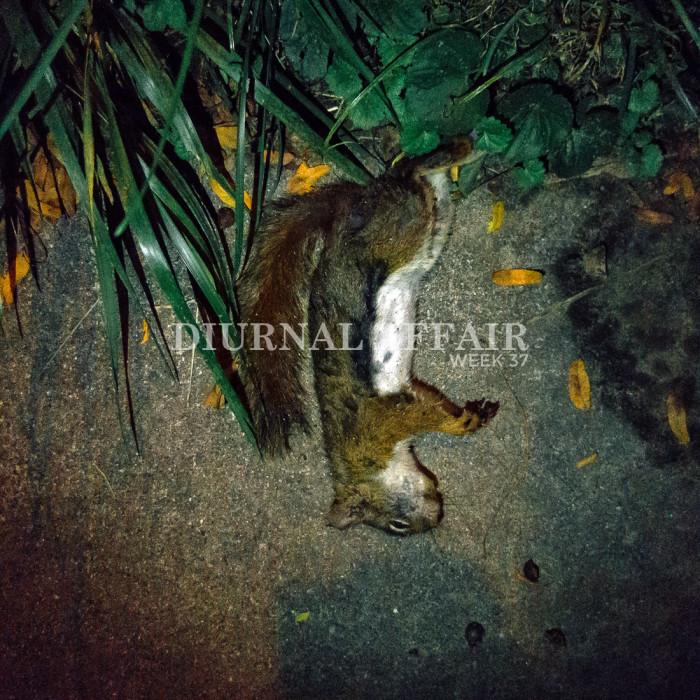 diurnal-affair-cover-week-37-2015-2